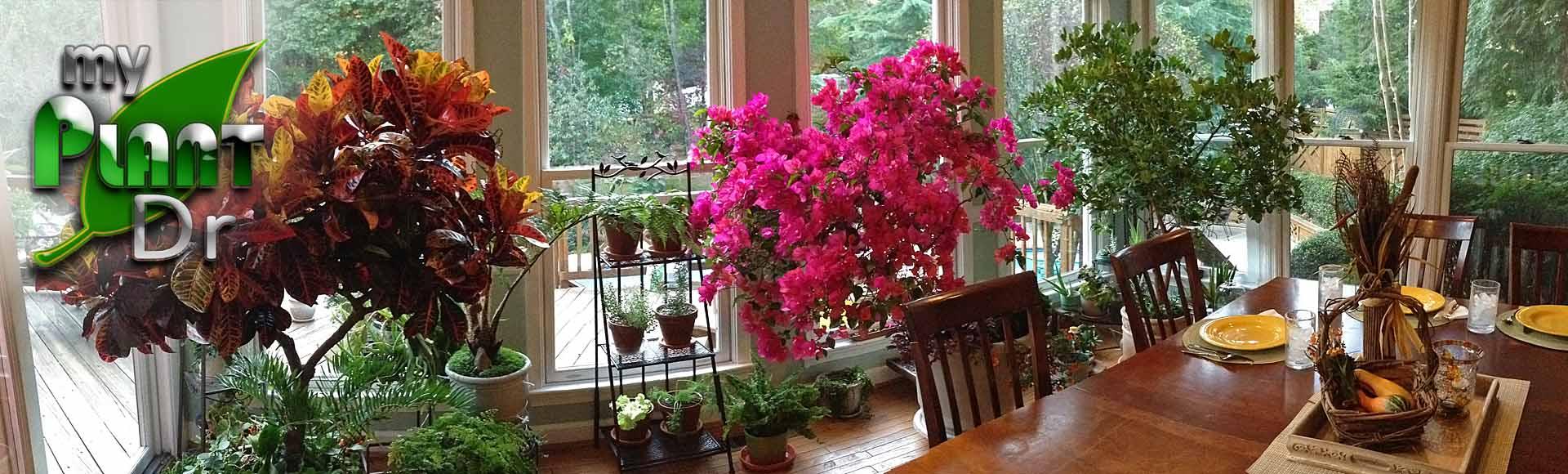 Favorite Plants